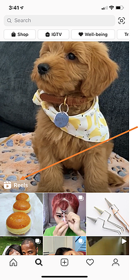 Where to find Instagram Reels content in Instagram Explore feed